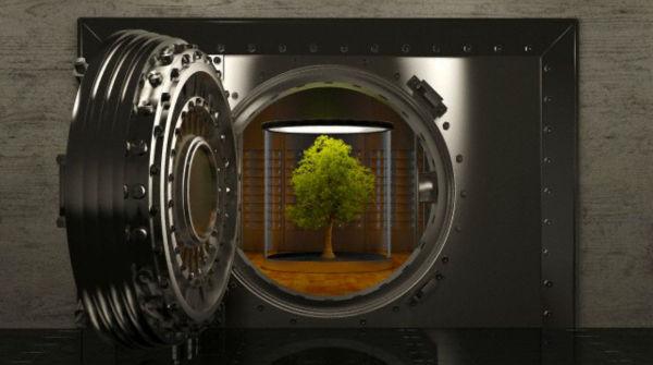 1415024460_alberi-600x335.jpg